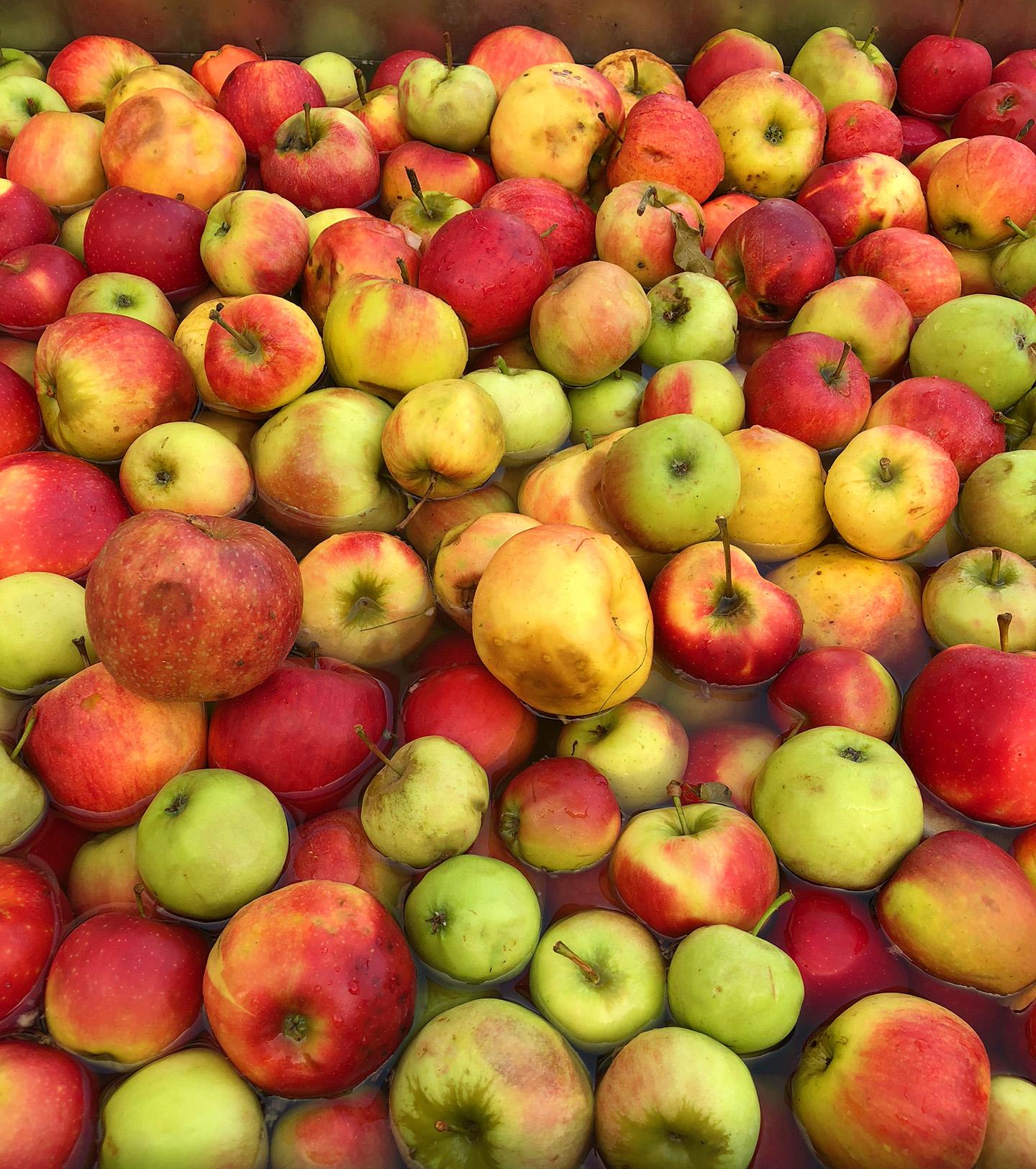 Production artisanale de jus de pommes avec l'aide du Service forestier de Mersch au cycle 1